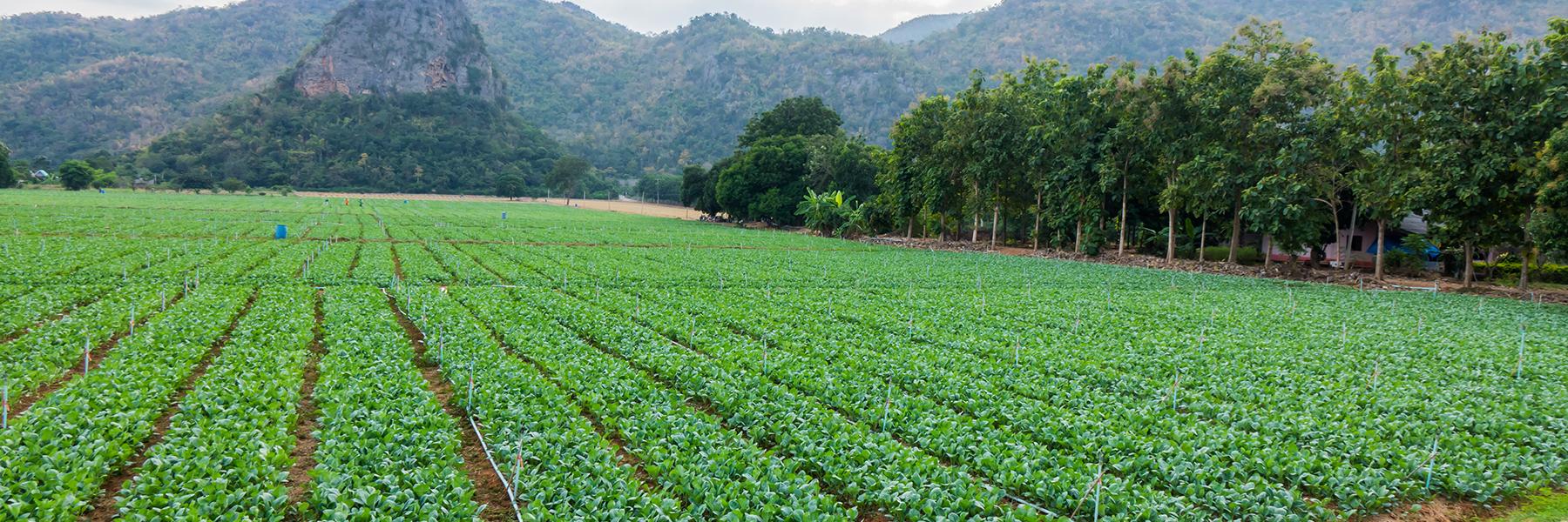 Root vegetables harvest nutrients